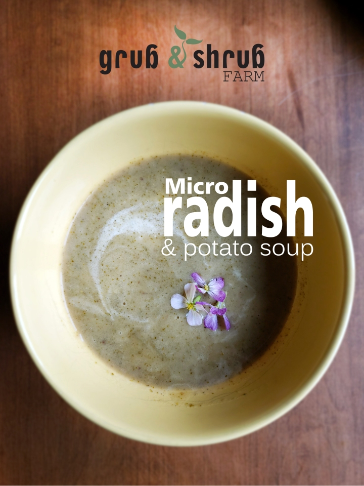 micro Radish & Potato soup